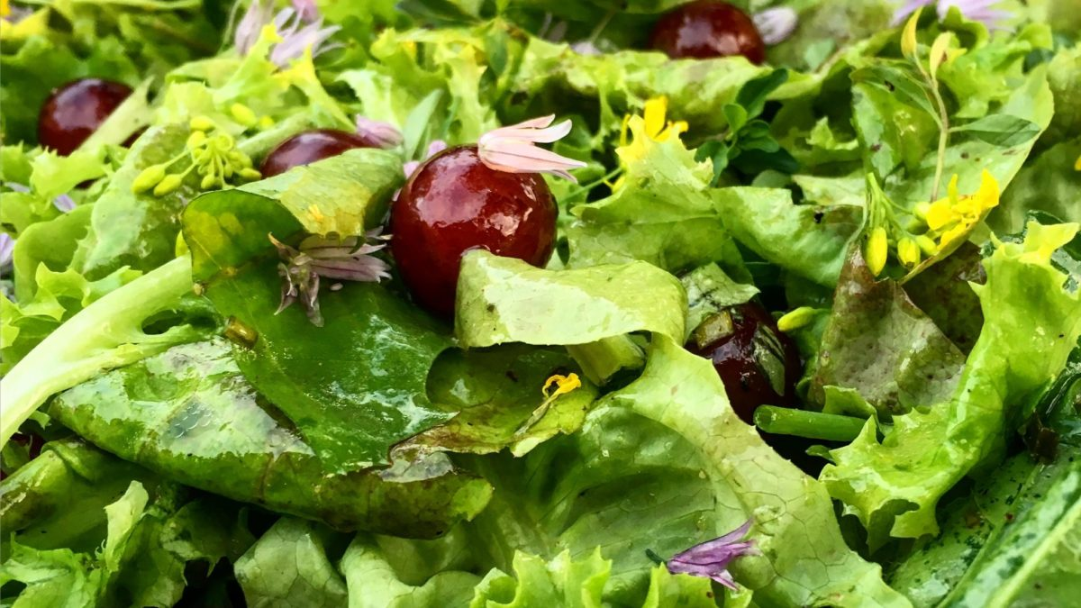 Garden Greens Salad with Thyme Chive Dressing